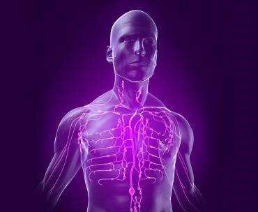 Generalitati despre Sistemul vascular limfatic